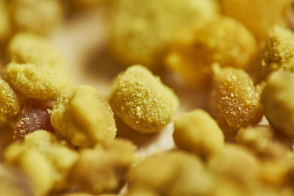 Картинка пыльцы пчелиной